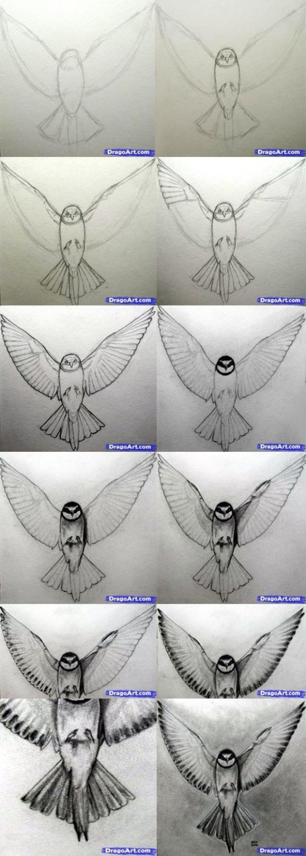 Cute Ways To Draw Birds and Animals