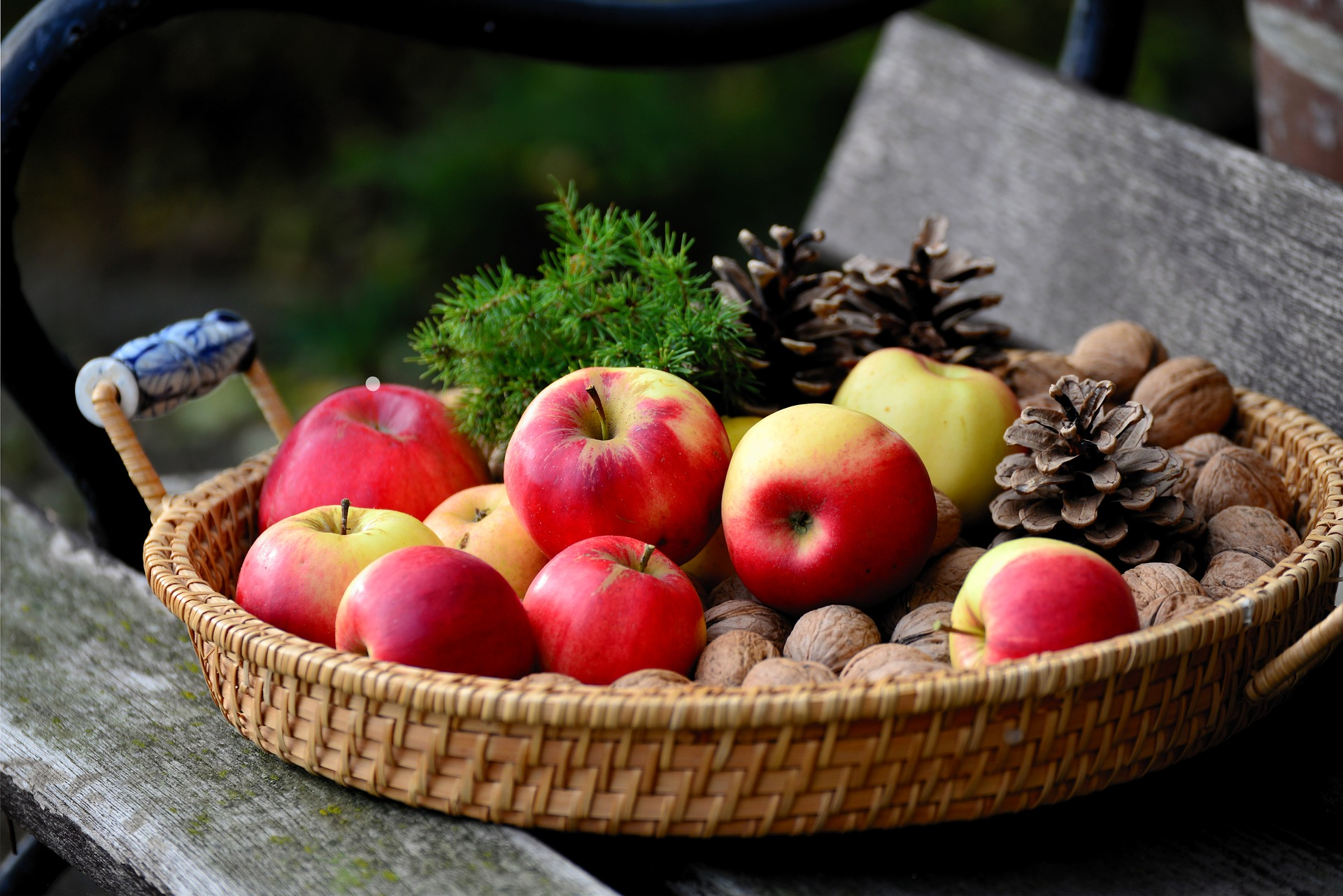A cane basket full of apples and walnuts