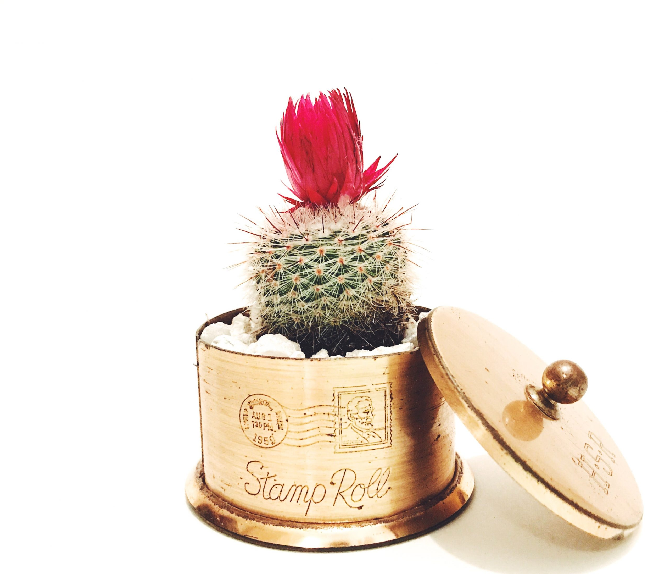 A cactus plant placed inside a golden metallic box