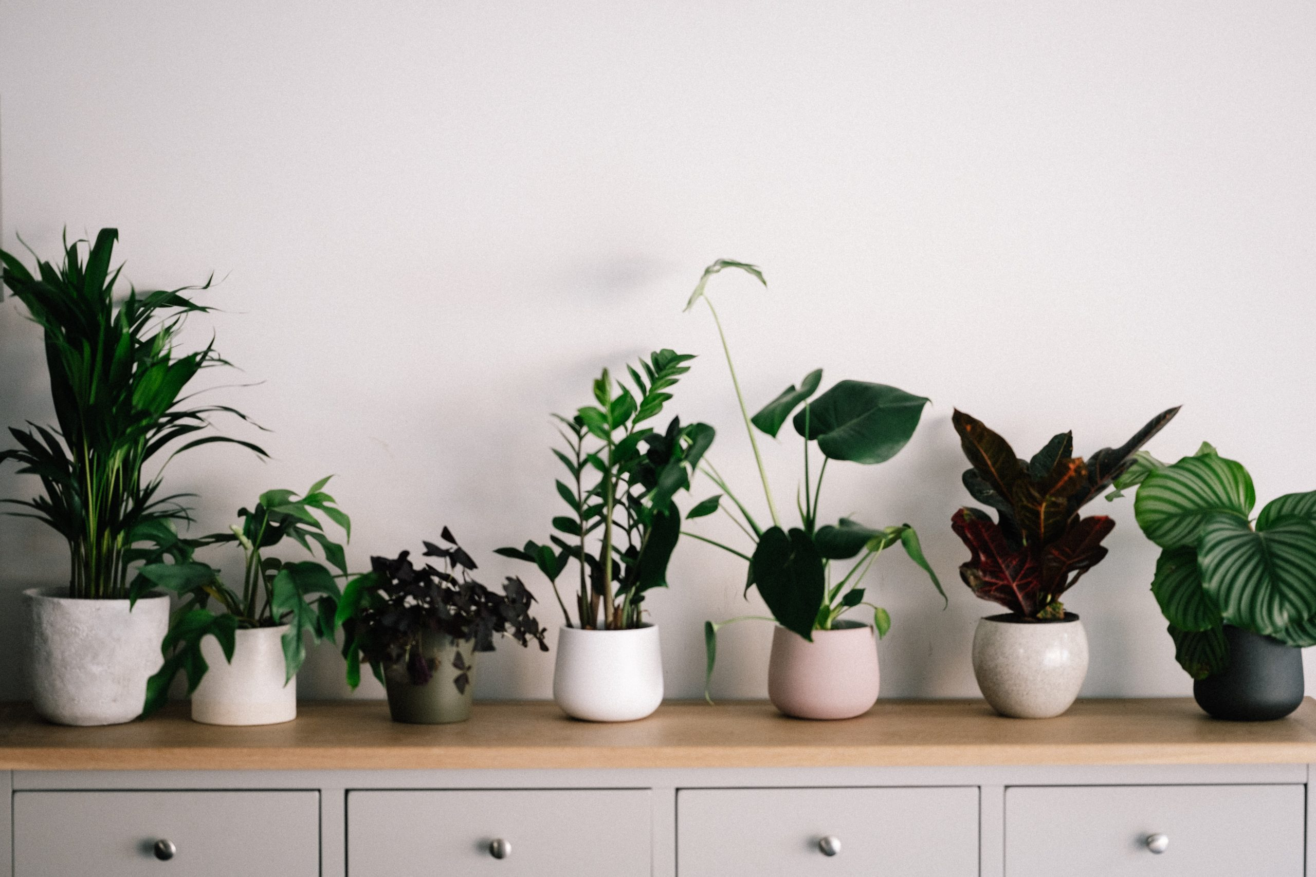 Seven plants in pots on top of a table/cupboard