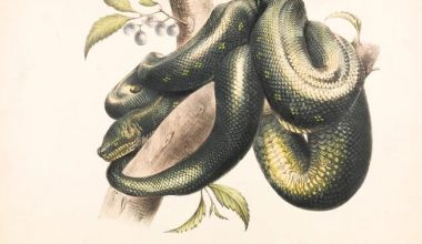 The image of a green serpent coiled around and ready to strike at the first chance.